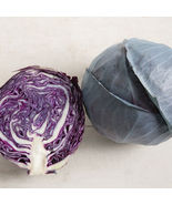 Omero Cabbage Seed Seed ,Vegetable Seeds, Ship From US - $15.00