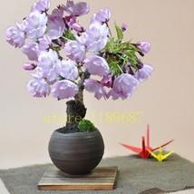 Mini Bonsai Desktop Decoration Flower Pot Plant Seeds Home Garden Indoor... - $3.99