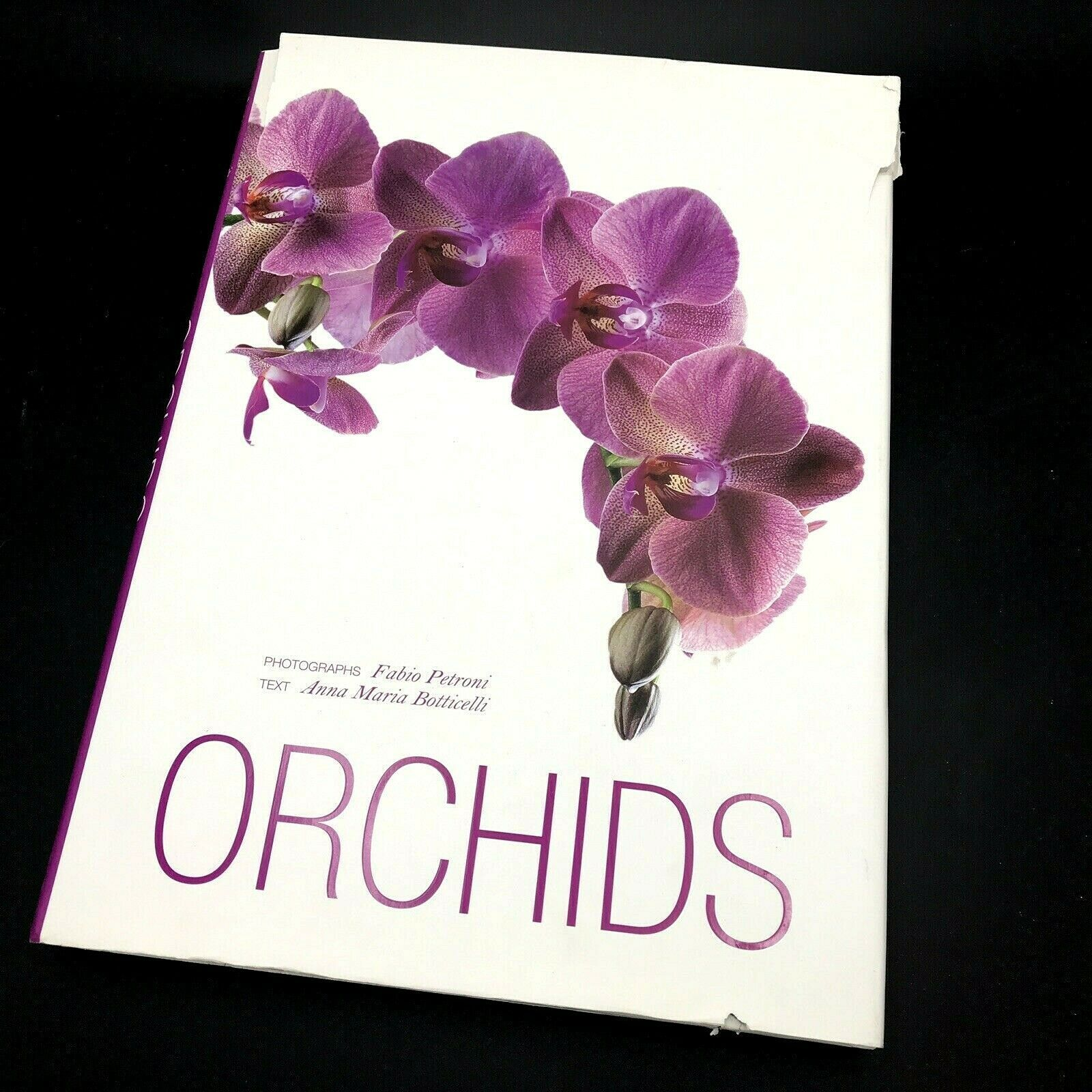 Primary image for Orchids Petroni Botticelli Flowers Plants Book Coffee Table Botany Flower 14""