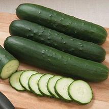 Cutter F1 Hybrid Cucumber Seeds (40 Seeds) - $4.79