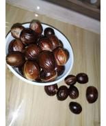 Best Quality (Grade A) Organic Fresh NUTMEG Sri Lanka - Free Shipping - $3.45