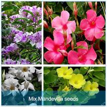 120 Pcs/bag Mandevilla Bonsai Seeds Potted Balcony Planting DIY Home Garden - $4.76