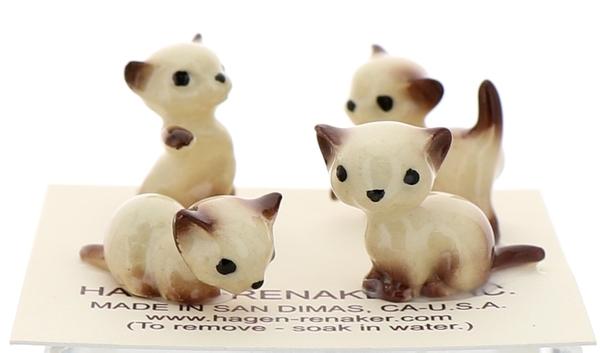 Tiny siamese kittens16