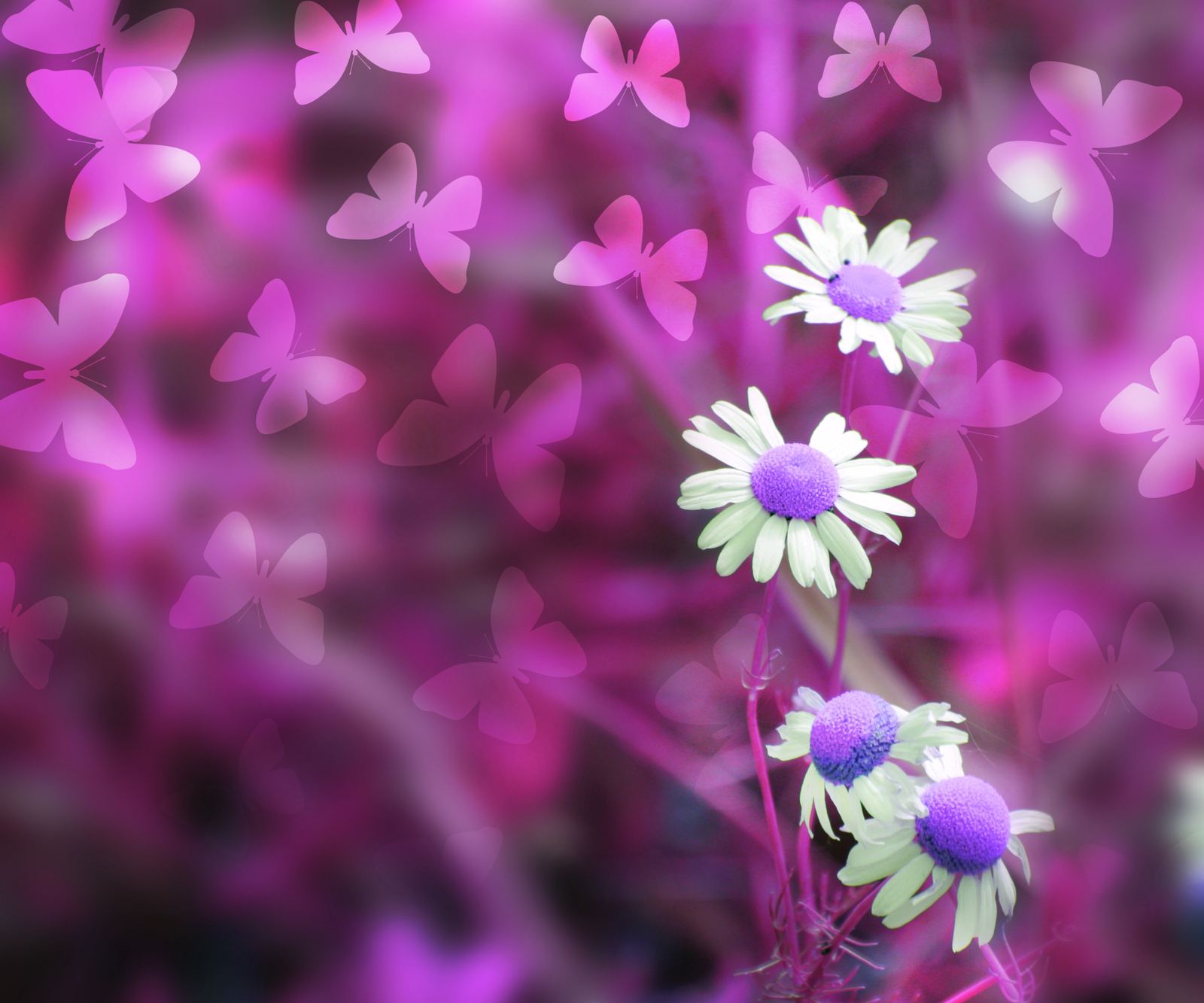 Pink abstract spring background fktceuc