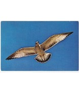 Animal Postcard Seagull In Azure Sky - $2.84