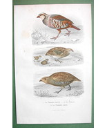 BIRDS Red & Grey Partridge Quail Partridge - 1860s COLOR Print by Buffon - $14.92