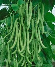 """1 lb """"Kentucky Wonder"""" Pole Bean Seeds, a.K.a Old Homestead,Long, green ... - $8.32"""