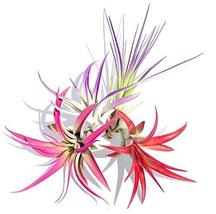 Air Plant Fun Pack Mix of 32 Plants Airplant, Tillandsia, Wedding Favors... - $284.13