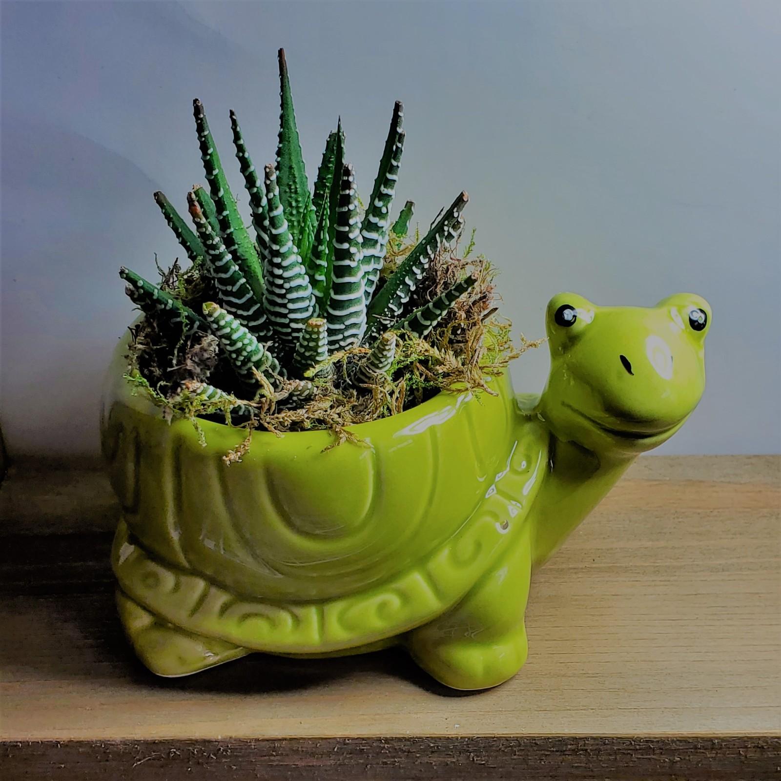 Turtle zebra 1