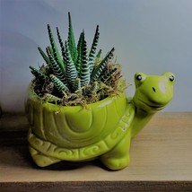 "Succulent in Ceramic Turtle Pot Live Haworthia Zebra Plant 5"" Green Planter image 1"