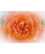 Triple Swirl, A. Rose Designs note card - $5.95+