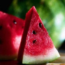 Watermelon Sugar Baby Seeds (Citrullus lanatus) 25+Seeds - $5.93+