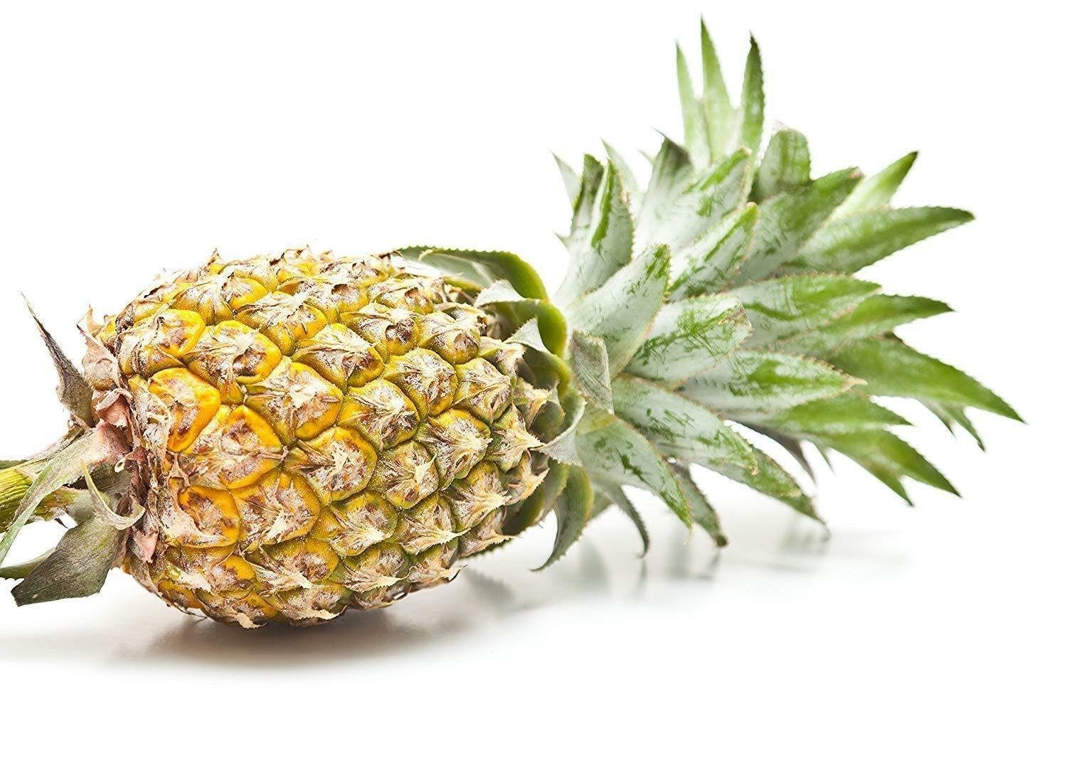 Primary image for Live Plant Pineapple Plant Fruiting fruit Florida Special Ananas Comosus