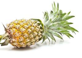 Live Plant Pineapple Plant Fruiting fruit Florida Special Ananas Comosus  - $66.00