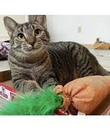 Kitten Cat toy Catnip Filled Carrot - $11.87