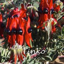 Hot Selling 10pcs Sturt's Desert Pea Seeds Swainsona Formosa Flower Seeds Bonsai - $7.55