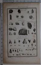 1788 ORIGINAL PRINT FOSSILS AMERICAN FERN STAR STONE PORUS FISHES TEETH - $119.98