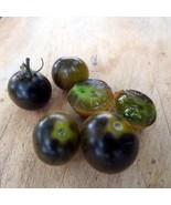 Black Bumblebee - unique gem of a tomato, new trial variety - $5.00