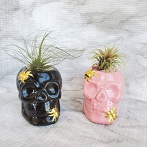 Skull with Air Plant, Ceramic Skull Planter, Black Skull, Halloween, Day of Dead image 5