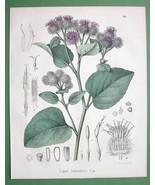 HAIRY BURDOCK Medicinal Lappa Tomentosa - 1860 SCARCE Color Botanical Print - $15.29