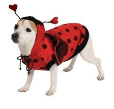 Lady Bug Pet Costume - €11,85 EUR