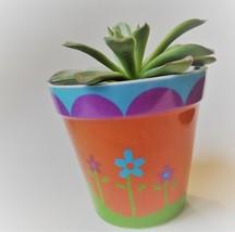 """Echeveria Succulent in Flower Design Pot, Live Plant, 4"""" Colorful Planter image 5"""