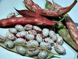 Organic RED MUNG  BEAN SEEDS~ known as Red Chori, For Spouting ,food or ... - $1.58+