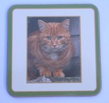 Ginger Cat Drinks Coaster Cork Backed Classic Coaster With Cat Photo Sold Singly - $3.88
