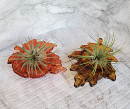 Live Air Plants in Glass Leaf Holders, set of 2 Airplant Pots, Fall Plant