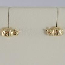 Ohrringe aus Gold Gelb 750 18K, A Lappen, Marienkäfer, Breite 7 MM image 1