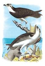 The Fish Hawk by Theodore Jasper - Art Print - $19.99+