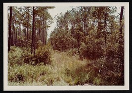 Vintage Photograph Beautiful Scenic View of Forest Trees and Grass - $6.93
