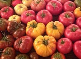 Brandywine Rainbow Mix Heirloom Seeds. 60+ seeds, or 1/4 gram - $7.99