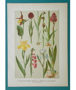FIELD FLOWERS 1896 Color Litho - Orchids Lady's Slipper Iris Gladiolus Lily - $34.20