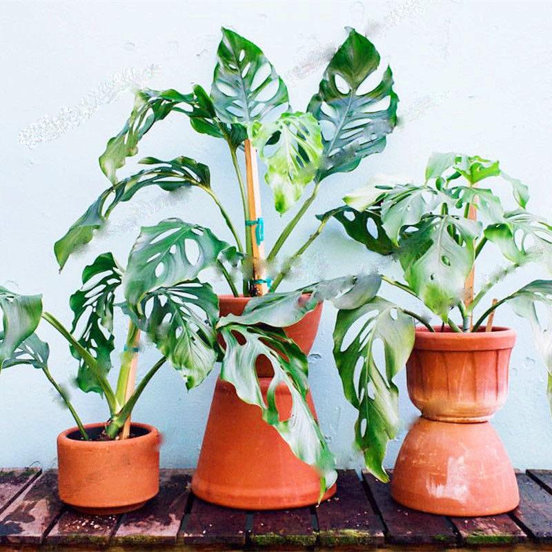 102Pcs Palm Tree Turtle Leaves,rare tree and 50 similar items