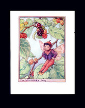 The Mulberry Tree Fairy Art by Cicely Mary Barker Original Early 1940s Editioin  - $13.90