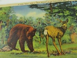 Vintage Curt Teich Comic Linen Postcard Little Dear Bare Behind Deer Bear 33190 - $23.75