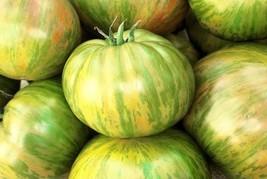 2000 Seeds of Big Zebra - Tomatoes Bi-Color - $59.40