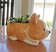 "Corgi Dog Planter + Succulent, String of Beads, 5"" Puppy pot, curio herreianus image 6"