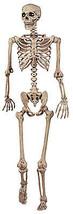 Posable Skeleton, 5-Ft. - £51.58 GBP