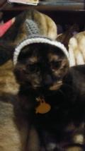 Costume Dog or Cat Hat - $10.99+