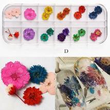 Dry Flowers Nail Art Decorations 3D Natural Daisy Sun Flower - 12 Colors / Box image 5