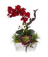 Seasonal Orchid & Succulent Garden w/White Wash Planter - $69.38