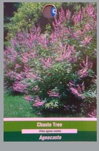 Vitex Chaste Tree 4-6 FT Large Plant Trees Flowers Easy To Grow Plants Garden ! - $96.95