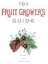 Vintage Fruit Prints: Alpine Strawberries - Fruit Growers Guide - 1880 - $12.82+