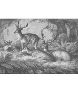 1801 ORIGINAL ETCHING Print by Howitt - Happy Deer Family in Forest amon... - $20.92