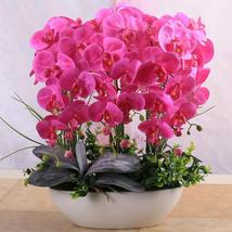 Phalaenopsis Suite Living Room Interior Decoration Flowers Potted 100 Seeds - $4.92