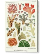 The Great Barrier Reef of Australia Cromo VII 1893 William Saville-Kent ... - $91.63+
