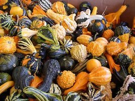 25 Small Mixed Ornamental Gourd Vegetables Seeds - $4.64