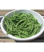 COOL BEANS N SPROUTS -Kentucky Wonder Pole Beans 50 Seeds per Pack, Non-... - $3.22